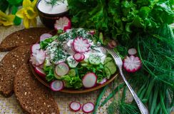 Salad of fresh organic radish and cucumber with dill and green onions dressed with sour cream royalty free stock photography