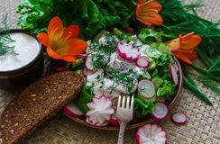 Salad of fresh organic radish and cucumber with dill and green onions dressed with sour cream royalty free stock images