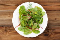 Salad of fress chard with dill in white plate oiled Stock Photography