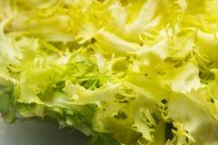 Salad frise Stock Image