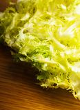 Salad frise Stock Photography