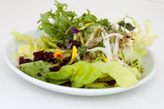 Salad of Frisee and Bibb lettuce Royalty Free Stock Images