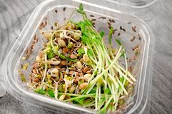 Salad of germinated seeds of flax pea lentils and other grains. Macrobiotic food concept.  stock photo
