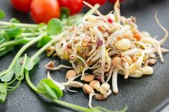 Salad of germinated seeds of flax pea lentils and other grains. Macrobiotic food concept. close up.  royalty free stock photos