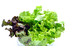 Salad. Green oak and red oak isolate on white background Stock Photo