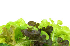 Salad green vegetarian with white background. Fresh green and purple cabbage made vegetarian salad put on pink tray with white background Royalty Free Stock Image