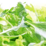 Salad greens Stock Photography