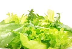 Salad greens Royalty Free Stock Images
