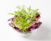 Salad greens Stock Image