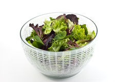 Salad greens Stock Photo