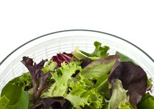 Salad greens Royalty Free Stock Photos