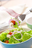 Salad with greens Stock Photos