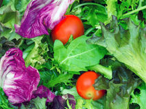 Salad greens food background Stock Photos