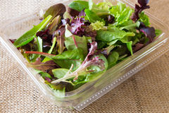 Salad Greens Stock Images