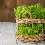 Salad greens from the garden Royalty Free Stock Images