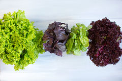 Salad greens, herbs. Stock Photography