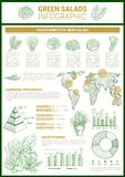 Salad greens and leaf vegetable infographic design Stock Photos