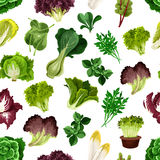 Salad greens and leafy vegetables pattern Stock Images