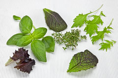 Salad greens and spices. Variety of lettuces and herbs on a white mat Stock Photography