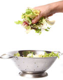 Salad in hand Royalty Free Stock Photography