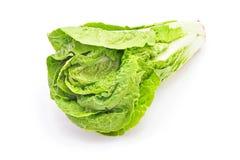 Salad head Royalty Free Stock Photo