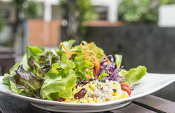 Salad. Healthy eating with hydroponics salad Royalty Free Stock Photo