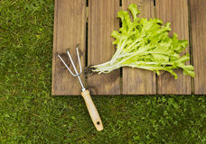 Salad and hoe Royalty Free Stock Photos