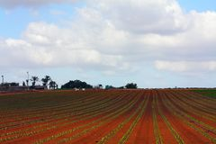 Salad on  Holy Land. Typical agricultural landscape of the central Israel Royalty Free Stock Image