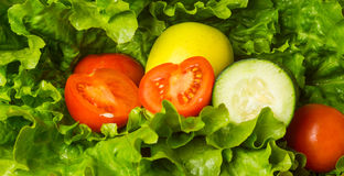 Salad ingredients Royalty Free Stock Photography