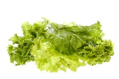 Salad Isolated Royalty Free Stock Photos
