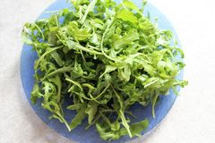 Salad of juicy green leaves of arugula. Light,summer diet salad of fresh arugula leaves a wonderful lunch on a hot summer day royalty free stock photos