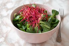 Salad with lamb`s lettuce and fresh red beet sprouts royalty free stock images
