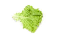 Salad leaf Royalty Free Stock Photos