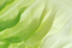 Salad leaf Royalty Free Stock Images