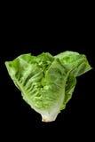 Salad leaf. Lettuce isolated Stock Photo