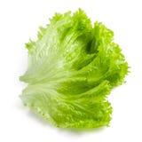 Salad leaf. Lettuce isolated on white. Background stock photo