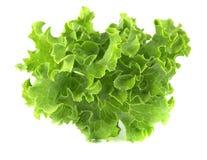 Salad leaf. Lettuce on white background. Salad leaf. Lettuce on white background, tasty, natural stock photos