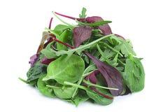 Salad leaf mix royalty free stock photos