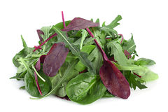 Salad leaf mix Stock Image