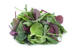 Salad leaf mix royalty free stock images