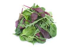 Salad leaf mix stock photos