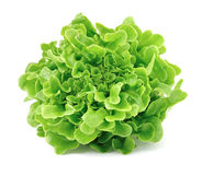 Salad leafs Stock Photos