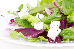 Salad with leafs and sheep cheese on plate Royalty Free Stock Photo