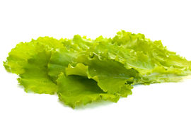 Salad leaves. On a white background Royalty Free Stock Image