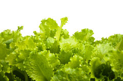 Salad leaves. On a white background Royalty Free Stock Images