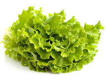 Salad leaves. On a white background Stock Photos