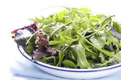 Salad Leaves Stock Photography