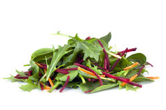 Salad Leaves Stock Images