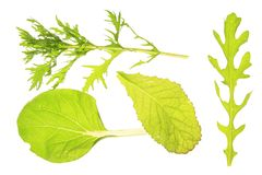Salad leaves. Mixture asian salads Stock Images
