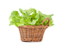 Salad leaves Stock Photo